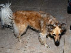Mascota. (jagar41_ Juan Antonio) Tags: perros perro animales animal argentina nikond5100 nikon d5100 mascota mascotas