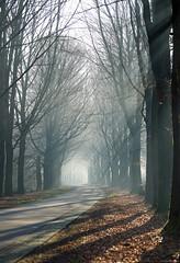 (CarolienCadoni..) Tags: sonyslta99 sal70200g2 70200mmf28gssmii trees rays raysoflight sun mistymorning misty foggy