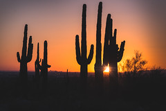 20161119-DSC_4153-Edit-2 (lilnjn) Tags: arizona landscape southwestunitedstates travel unitedstates sky sunrise whitetank