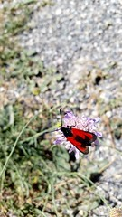 Red Insect (michellemätzig) Tags: spring flower red mountain europe black purple norway wow best beautiful favorite fantastic forest exciting incredible gorgeous ho good awesome nature