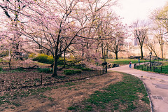 Wake up early and so something for yourself (RomanK Photography) Tags: centralpark landscape manhattan nyc newyorkcity flowers nature sonyalpha spring