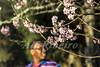 Alf Ribeiro 0135 0057 (Alf Ribeiro) Tags: colorido corderosa culturajaponesa festa festaoriental festatradicional flor flores galhos multidão parqueurbano parquedocarmo pessoa pessoas planta prunussp regiãosudeste cerejeira colôniajaponesa comemoração ensolarado festival flora floração florida florido inverno zonaleste árvore
