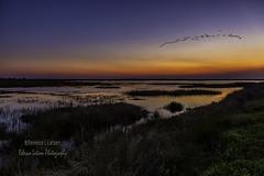 Sunrise Over Olney Pond (rebeccalatsonphotography) Tags: sunrise morning sun bnwr brazoria nationalwildliferefuge wildliferefuge rebeccalatsonphotography tx texas wetlands flatland morningcolors