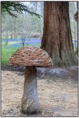 Magic Mushrooms? (Antirrhinum) Tags: wakehurstplace nationaltrust nt kew toadstool mushroom