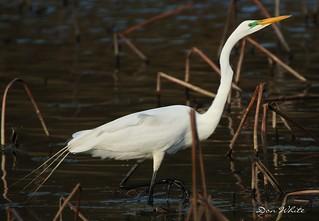 egret among fronds    Explored