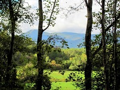 Mountain Pasture, Amherst County (David Hoffman '41) Tags: autumn trees sunlight mountains nature clouds rural landscape virginia scenery farm country meadow peaceful pasture bark openspace appalachian peaks agriculture tranquil grazing lightgreen blueridge darkgreen amherstcounty sandidges