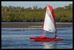 Shorncliffe to Gladstone Yacht race Day-17= (Sheba_Also) Tags: race day yacht gladstone shorncliffe