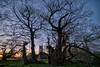 Tortworth Chestnut sunset (Matt Bigwood) Tags: sunset church st nikon gloucestershire chestnut f28 hdr d800 leonards tortworth 14mm samyang oloneo hdrengine
