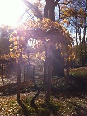 Fall_Talkoot_119