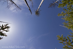 """Trees Reaching for the Sky • <a style=""""font-size:0.8em;"""" href=""""http://www.flickr.com/photos/63501323@N07/14058665748/"""" target=""""_blank"""">View on Flickr</a>"""
