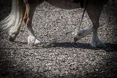 """running Horse ("""" Bernhard Witt """") Tags: horse nature running tamron70200 sonyalpha850"""