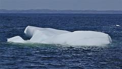 bergy bit, Bauline (heatherybee) Tags: iceberg bauline bergybit newfoundlandandlabrador