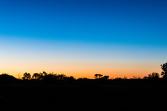 Sunrise in the outback (bflinch1) Tags: blue trees orange silhouette sunrise early colorful earlymorning australia outback southaustralia geophysics apylands