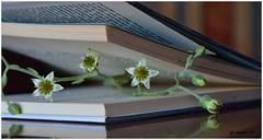 El libro y la flor.