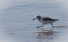 Little Bird on the Ocean