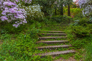 Stairsteps in Spring in Seattle's Washington Park Arboretum