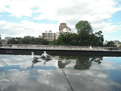 QUIET MOMENTS (RubyGoes) Tags: blue autumn trees sky seagulls white clouds buildings reflections pond sydney australia nsw collegest
