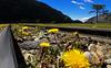 Schienen durch den Nationalpark (inmyeyespictures) Tags: nationalpark urlaub schiene argentinien feuerland hundeblume 201111