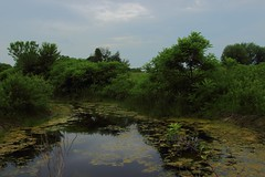 Backyard water feature (kirsten.elise) Tags: trees plants green texture water rain contrast canon pond backyard cloudy michigan gimp sigma foliage photoediting 20mm practice f80 wa