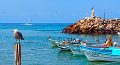 che colore... a harbor scene! (uteart) Tags: pelicans mexico boats harbor turquoise seagull surfing bahiadebanderas wharf puertovallarta puntamita whalewatching fishingvillage fishingharbor elanclote utehagen uteart checolore