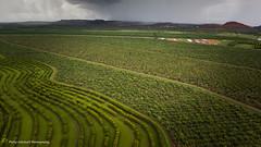 Ord Patterns (Philip Schubert IMAGES) Tags: storm wet river australia aerial outback agriculture kimberley ord mangoes westernaustralia rugged sandalwood kununarra