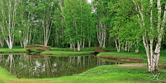 Beautiful Birch 7953-14 (StacyN - MichiganMoments) Tags: bridge trees reflections pond woods birch charlevoix stacyniedzwiecki