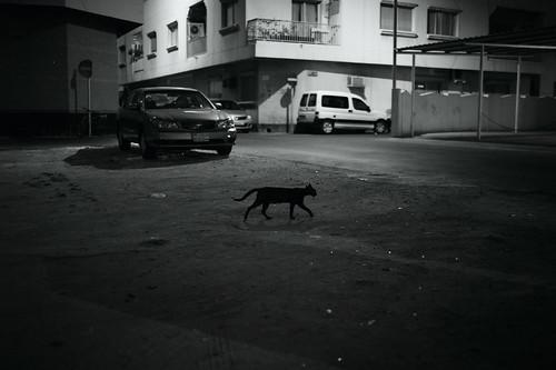 Black Cat (Explored)