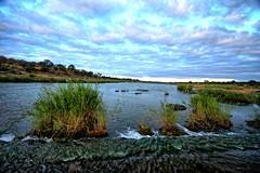 In the middle of the rapids (biosynthesis24) Tags: birds southafrica safari giraffe elephants termites impala hippos cheetahs krugernationalpark waterbuffalo crocodiles wildebeest kruger zebras hyenas dika mopani impalaflower
