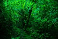 Jungle Path (timberwolf1212) Tags: costarica jungle tropical cloudforest sangerardodedota riosavegrevalley
