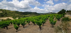 Vineyard.  With clouds. (Bendigoish) Tags: summer sky cloud france vineyard vine languedoc