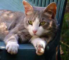 gatti di Castelluccio Siculo: Bello (Ernemann) Tags: gatto gatti sicilia castellucciosiculo gattidicastellucciosiculo
