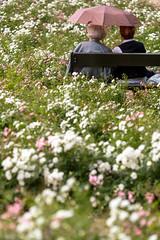 Elder flowers (ole) Tags: park flowers summer women europe poland warsaw chopin umbrela grannies