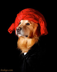 Portrait of Dog in a Red Turban (bztraining) Tags: zachary ddc odc