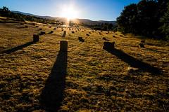 hay bales (joseapho) Tags: summer verano mow campo hay bales alpacas pacas heno segar