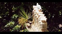 Palm Tree Growing From Chimney Torquay (Torquay Palms) Tags: road uk chimney england west tree english rock bay riviera britain walk seagull gull south united country great steps kingdom palm stack devon warren tor torquay australis herring westcountry torbay cordyline hs20 exr photoscape caustralis chimnaeys