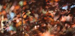 DSC_10773 vNX flou (criscrot) Tags: nature bokeh nancy lorraine arbre d3 flou feuille feuillage sigma105mm parcsaintemarie
