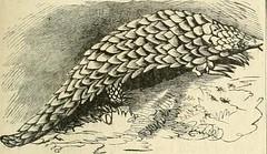 Anglų lietuvių žodynas. Žodis panhellenism reiškia panellenizmas lietuviškai.
