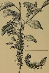 Anglų lietuvių žodynas. Žodis spring cankerworm reiškia pavasario cankerworm lietuviškai.