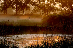 on golden pond ~ Michigan (j van cise photos) Tags: sunlight mist water golden pond michigan earlymorning continentalunitedstates nikond7100 ruralwashtenaw pressltoenlarge