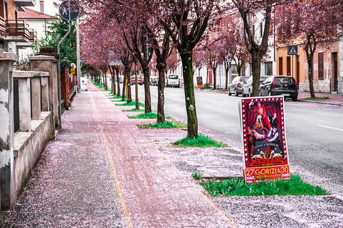Gorizia - cherry tree street