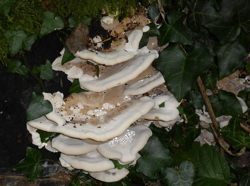 Jewelled fungi