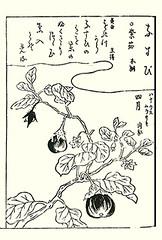 Eggplant (Japanese Flower and Bird Art) Tags: flower eggplant solanum melongena solanaceae shunsen ooka kano woodblock picture book japan japanese art readercollection