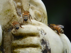 Honey Bee careful..(Explored 04/11/2017) (timber1212) Tags: ebparksok ebrp ardenwood historical farm fremontca sfbayarea bee boy fish