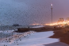 Murmuration in stormy conditions (Gary Sanders Photography) Tags: starlings murmuration brighton hove westpier seafront waterscape seascape beach pebbles birds flocking roosting dusk i360