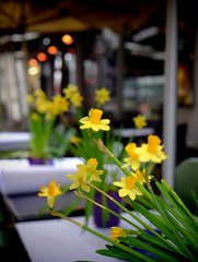 Spring has sprung (halifaxlight) Tags: denmark copenhagen downtown cafe tables flowers daffodils spring street bokeh