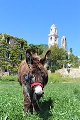 Benvenuti a Bussana Vecchia (Bi_photo) Tags: italia italy sanremo bussana borgo animal nature