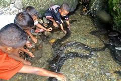 Ikan belut - Eels, Kolam Morea, Larike, Leihitu, Ambon, Maluku (Sekitar) Tags: maluku moluccas molukken pulau nusa islands indonesia asia ambon leihitu ikan belut eel kolam morea larike anak kids