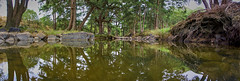 Tuggeranong Creek (RobMacPhotography) Tags: landscapes panorama reflection tuggeranong creek water trees roots rocks river sony a6000 rob mac photography canberra act australia green