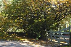 Mt Wilson 2 (trisharooni) Tags: australia autumn mtwilson breenhold