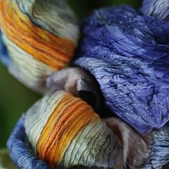 faded iris (jtr27) Tags: sdq1869frc jtr27 sigma sd quattro sdq 70mm f28 ex dg macro iris flower 11 square abstract manualfocus